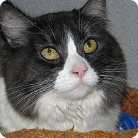 Adopt A Pet :: Kitty - Ruidoso, NM