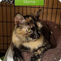Adopt A Pet :: Mama - Fayette City, PA