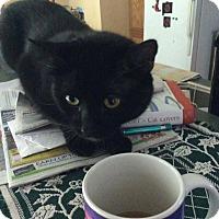 Adopt A Pet :: Antonio - Queensbury, NY