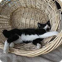Adopt A Pet :: Tuc - Apex, NC