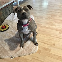 Adopt A Pet :: Madeline - West Hills, CA