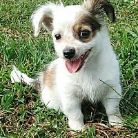 Adopt A Pet :: Star's