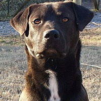Adopt A Pet :: Finley (CNC) - Allentown, PA
