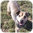 Photo 2 - Shepherd (Unknown Type) Mix Dog for adoption in Phoenix, Oregon - Shep