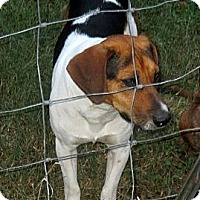 Adopt A Pet :: ALEX/Adorable Video - Glastonbury, CT