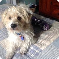 Adopt A Pet :: Jory - Santa Monica, CA