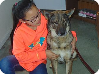 German Shepherd Dog Mix Dog for adoption in Greeneville, Tennessee - Madea