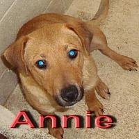 Adopt A Pet :: Annie - Coleman, TX