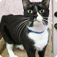 Adopt A Pet :: Felicia (sister of Fiona) - Witter, AR