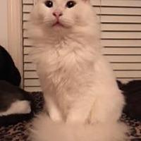 Adopt A Pet :: BRETT - Washington, NC