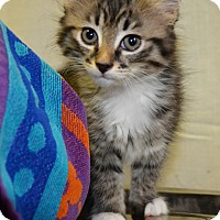 Adopt A Pet :: RC Cola - Savannah, GA