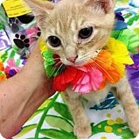 Adopt A Pet :: JEFFREY - Northfield, OH