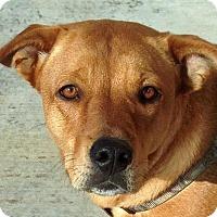 Adopt A Pet :: Shasta - Oklahoma City, OK