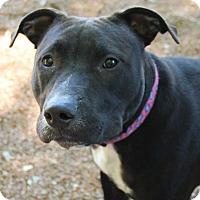 Adopt A Pet :: Carson - O Fallon, IL