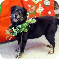 Chow Chow Mix Dog for adoption in San Leon, Texas - Rita