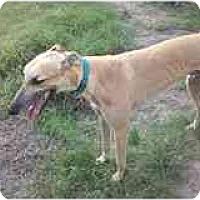 Adopt A Pet :: Milo - Vidor, TX