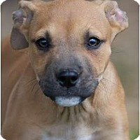 Adopt A Pet :: BeBe - Providence, RI