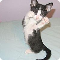 Adopt A Pet :: Eddie - Mobile, AL