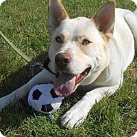 Adopt A Pet :: Roger - Lockhart, TX