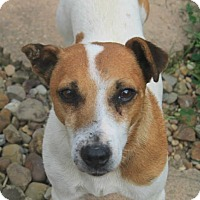 Adopt A Pet :: Rollo - North Olmsted, OH