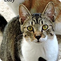 Adopt A Pet :: Dolly - Southlake, TX