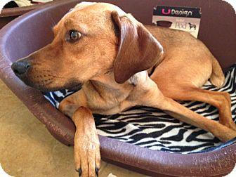 Hound (Unknown Type) Mix Dog for adoption in Nashville, Tennessee - Piper B
