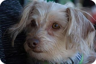 Terrier (Unknown Type, Medium) Mix Dog for adoption in Phoenix, Arizona - Summer