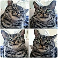 Adopt A Pet :: Posh - Sherman Oaks, CA
