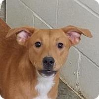 Adopt A Pet :: Kathy - Paducah, KY