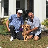 Adopt A Pet :: Sweety - Murrells Inlet, SC