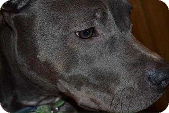 Pit Bull Terrier Dog for adoption in Wenonah, New Jersey - Eve