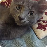 Adopt A Pet :: Elias - Novato, CA