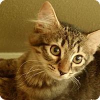 Adopt A Pet :: Magpie - Tampa, FL