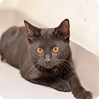 Adopt A Pet :: 10311464 KODY - Brooksville, FL