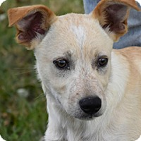 Adopt A Pet :: Catfish - Adorable - Texico, IL