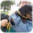 Photo 3 - Dachshund Dog for adoption in Lexington, Missouri - Roy