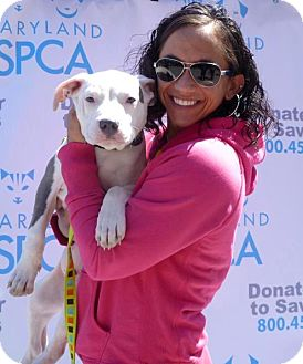Pit Bull Terrier Mix Puppy for adoption in Reisterstown, Maryland - Rocky