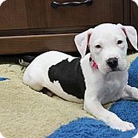 Adopt A Pet :: Sugar Baby - Loxahatchee, FL