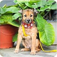 Adopt A Pet :: Kobi - Vancouver, BC