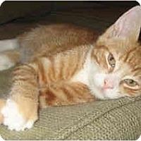 Adopt A Pet :: Elliot - Davis, CA