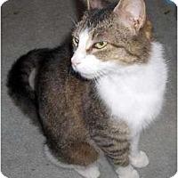Adopt A Pet :: Fran - Richmond, VA