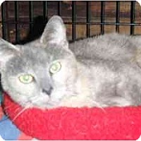 Adopt A Pet :: Alexis - Pasadena, CA