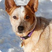 Adopt A Pet :: Chevy - Delano, MN