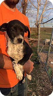 Labrador Retriever Mix Puppy for adoption in McCurtain, Oklahoma - Sadie