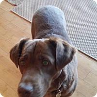 Adopt A Pet :: Precious - Rexford, NY