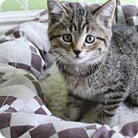 Adopt A Pet :: Saltine - Red Wing, MN