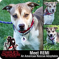 Adopt A Pet :: Remi - Spring City, PA