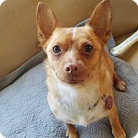 Adopt A Pet :: Cooper - Bellingham, WA