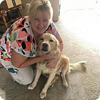 Adopt A Pet :: Bentley - Murrells Inlet, SC