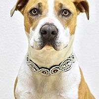 Adopt A Pet :: Samantha - Dublin, CA